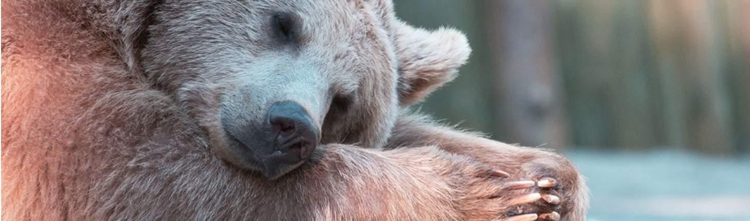 Hibernation martinoli ultrasound courses